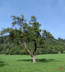 CIMG2142-crop