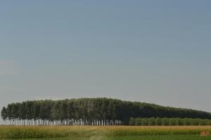 Land (3)