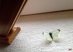 Schmetterling.2JPG.JP