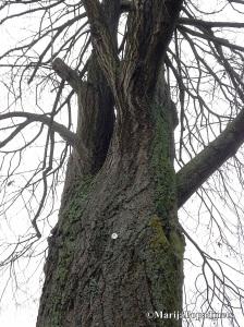 Baum-Schmerz
